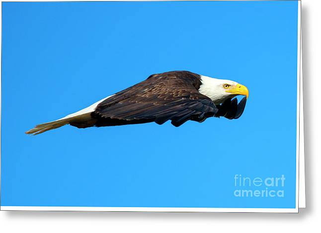 Wings Greeting Card by Mike Dawson