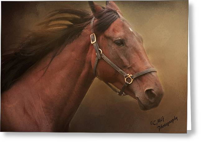 Race Horse Greeting Cards - Winning the Race Greeting Card by Cynthia Goldman