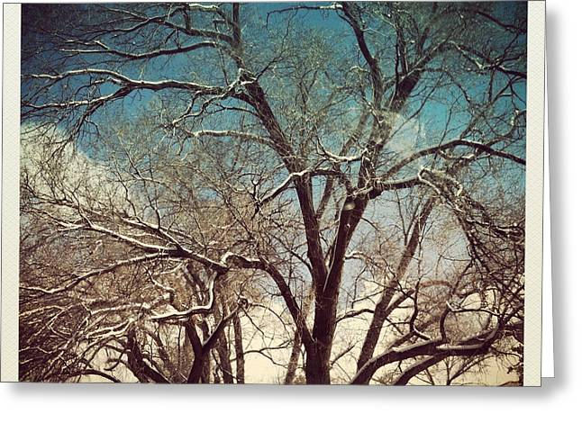 Phot Art Greeting Cards - Winter Afternoon Greeting Card by Roselynne Broussard