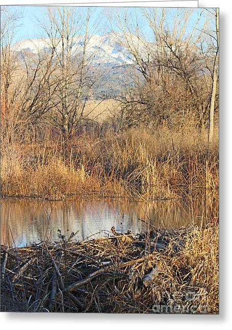 West Fork Greeting Cards - Winter Beaver Dam Charm CO     Greeting Card by Dale Jackson
