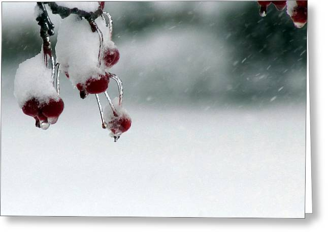 Berry Greeting Cards - Winter Berries Greeting Card by Joni Moseng