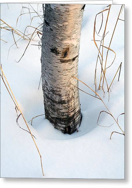 Winter Birch Greeting Card by Bill Morgenstern