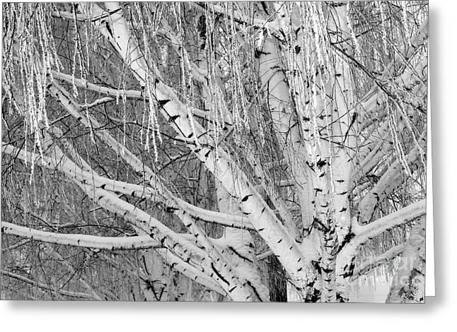 Icy Winter Birch Tree  Greeting Card by Carol Groenen