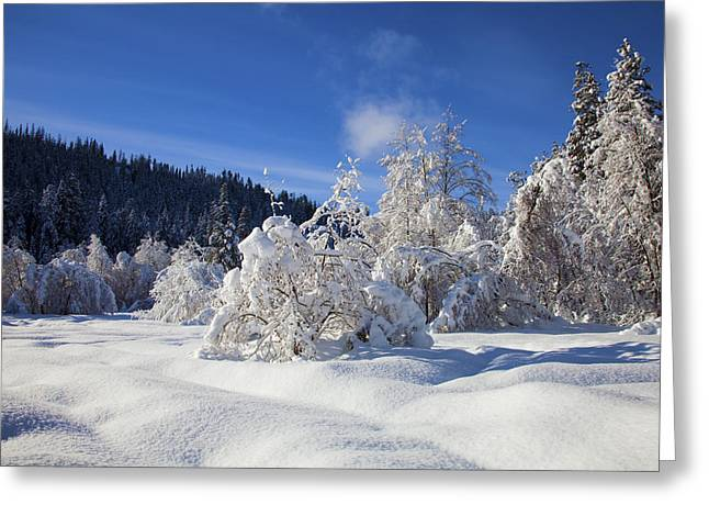 Blanket Photographs Greeting Cards - Winter Blanket Greeting Card by Mike  Dawson