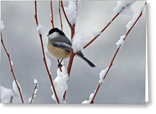 Winter Chickadee Greeting Card by Diane E Berry