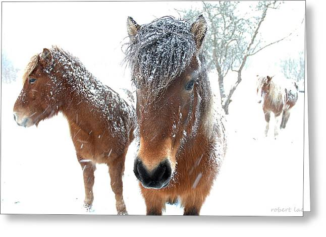 Snowstorm Greeting Cards - Winter Chills Greeting Card by Robert Lacy