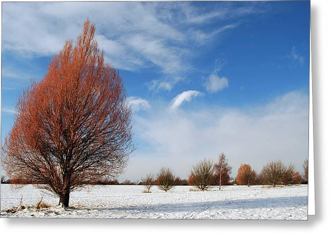 Rural Snow Scenes Greeting Cards - Winter Colours Greeting Card by Terence Davis