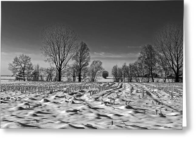 Cornstalks Greeting Cards - Winter Cornfield Greeting Card by Berg Steigeren