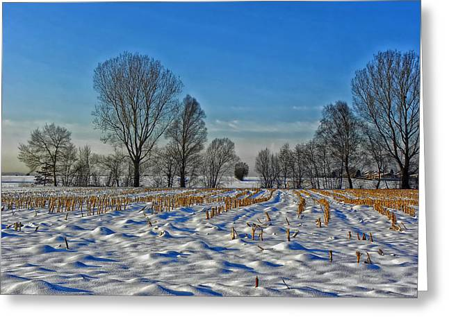 Cornstalks Greeting Cards - Winter Cornfield  Greeting Card by Berg Steigerin