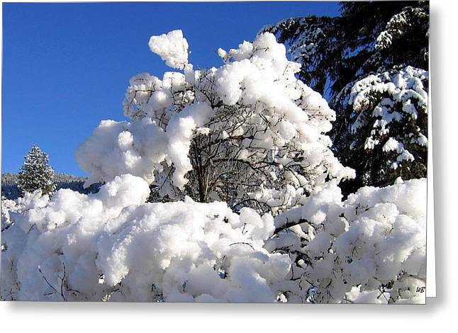Cotton Balls Greeting Cards - Winter Cotton Greeting Card by Will Borden