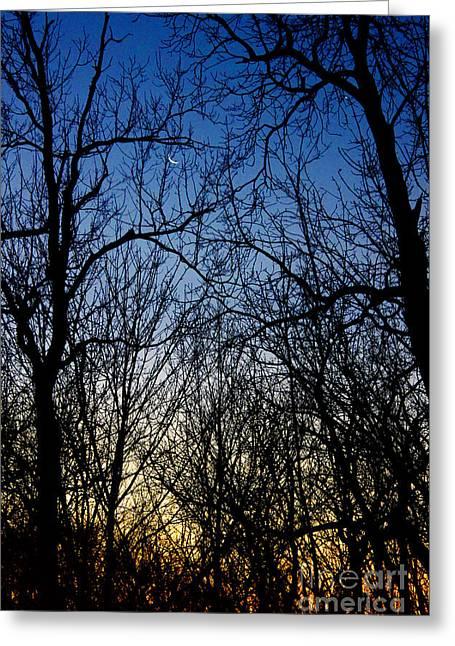 Winter Crescent Moon Greeting Card by Karen Adams