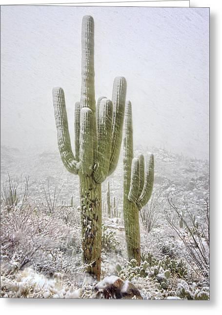 Winter Day In The Desert Southwest  Greeting Card by Saija Lehtonen