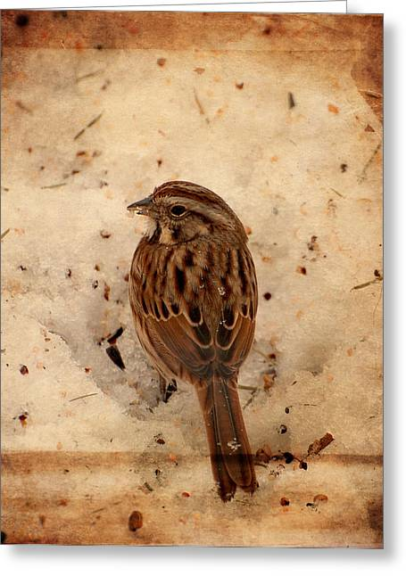 Sparrow Greeting Cards - Winter Feast I - Textured Greeting Card by Angie Tirado