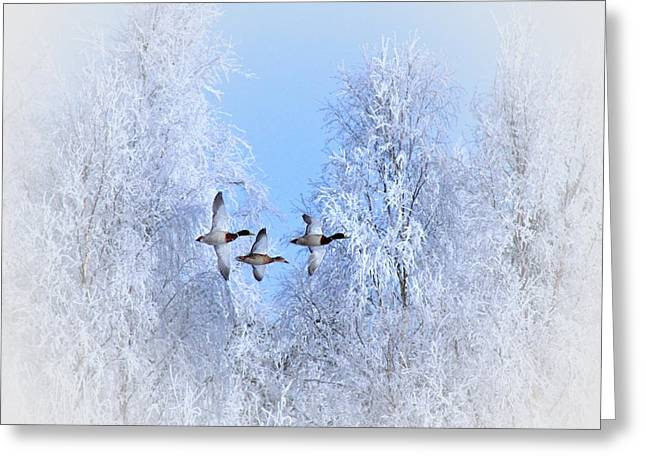 Winter Flight Of The Geese Greeting Card by Movie Poster Prints