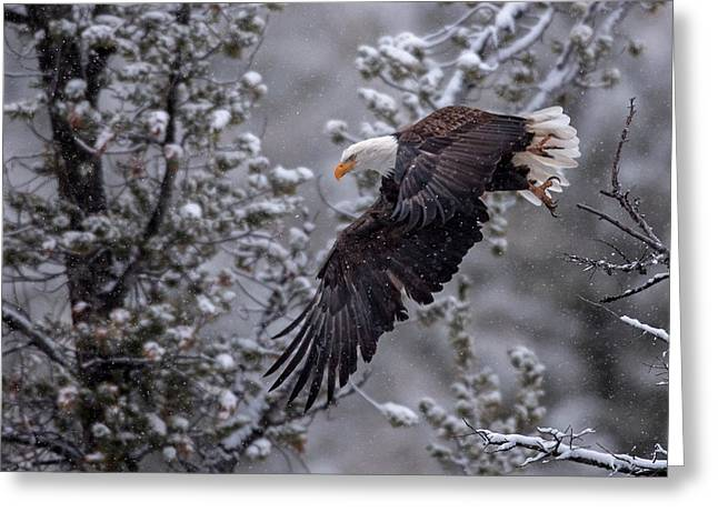 Winter Flight Greeting Card by Sandy Sisti