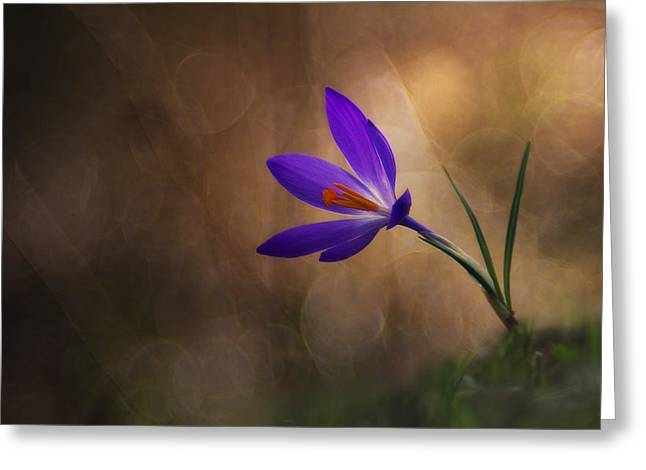 Crocus Flower Greeting Cards - Winter Flower Greeting Card by Edoardo Gobattoni