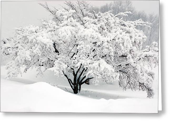 Snow Drifts Digital Art Greeting Cards - Winter Fluff Greeting Card by Richard Ortolano
