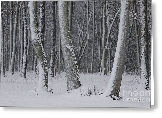 Dreamy Landscape Greeting Cards - Winter Forest Greeting Card by Sean Cupp