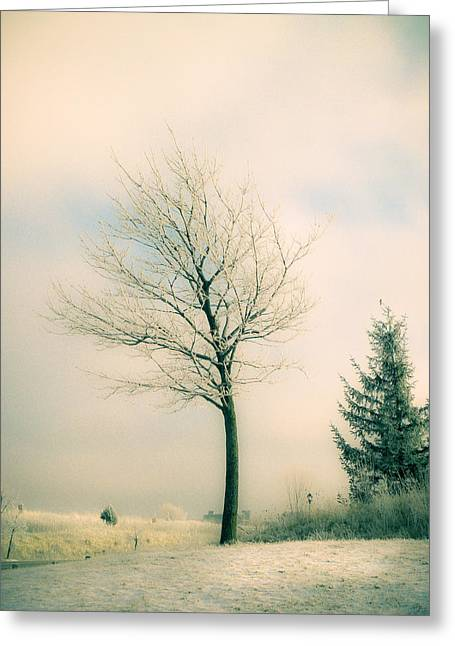 Gloomy Winter Greeting Cards - Winter Freeze Greeting Card by Julie Palencia