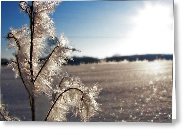 Seasons Greeting Cards - Winter Frost 5 Greeting Card by Scott Hovind