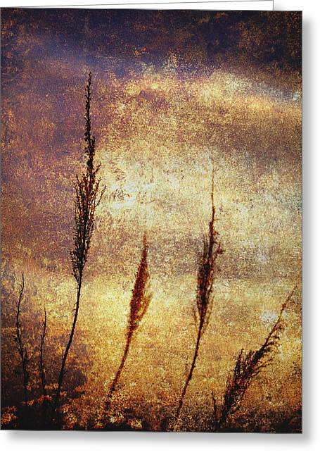 Gold Flowers Greeting Cards - Winter Gold Greeting Card by Skip Nall