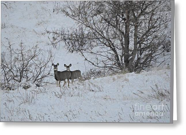 Winter Greeting Greeting Card by Chalet Roome-Rigdon