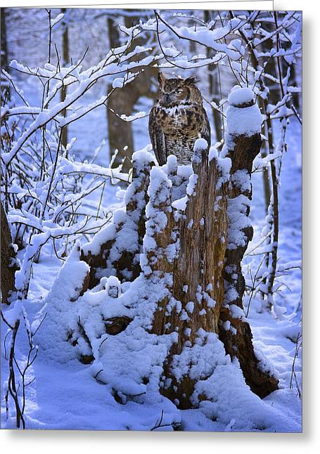 Ron Woods Greeting Cards - Winter Guest Greeting Card by Ron Jones