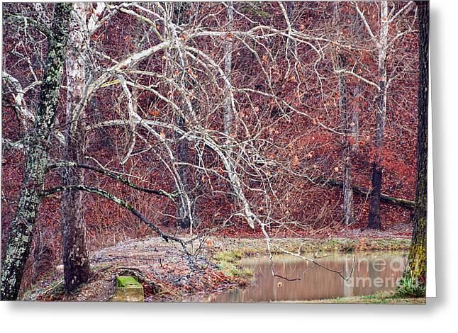 Arkansas Greeting Cards - Winter in Arkansas Greeting Card by Fred Lassmann