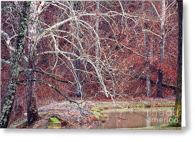 Winter in Arkansas Greeting Card by Fred Lassmann