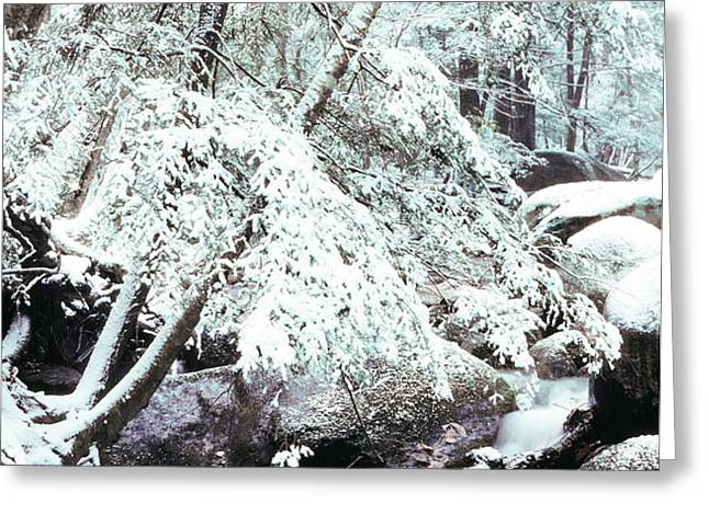 Winter in Shenandoah Greeting Card by Thomas R Fletcher