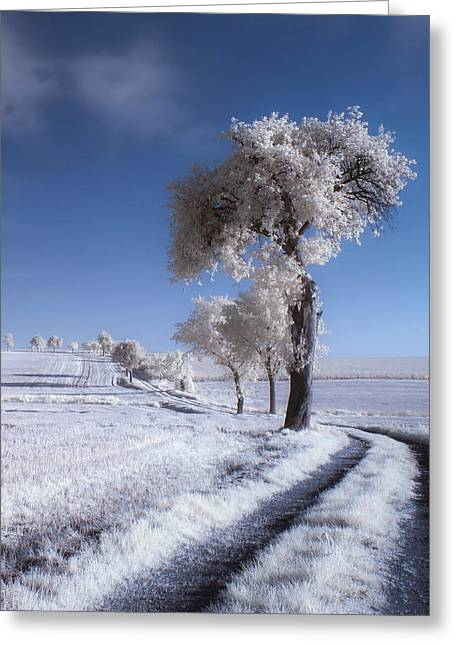 Infrared Greeting Cards - Winter In Summer Greeting Card by Piotr Krol (bax)