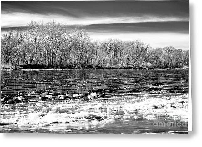 Canadian Winter Art Greeting Cards - Winter in the Delaware Valley Greeting Card by John Rizzuto