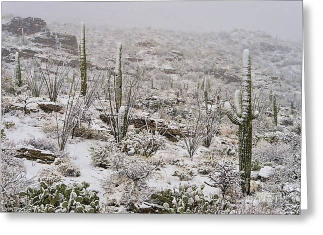 Rincon Greeting Cards - Winter In The Desert Greeting Card by Sandra Bronstein