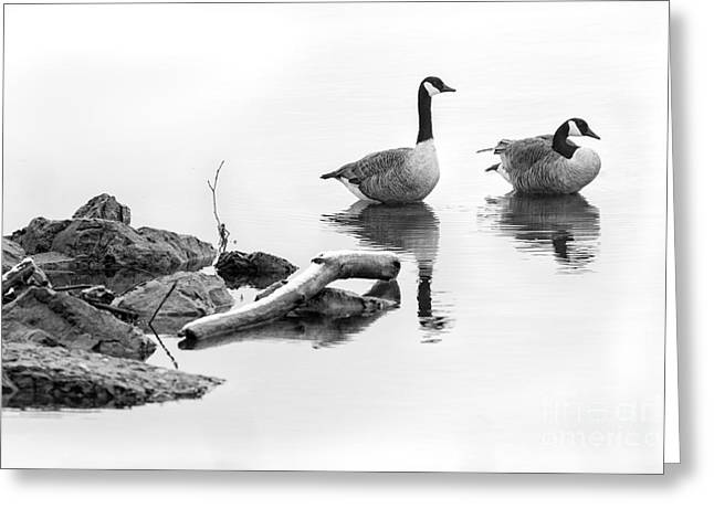 Steffey Greeting Cards - Winter Lake Residents Greeting Card by Michele Steffey
