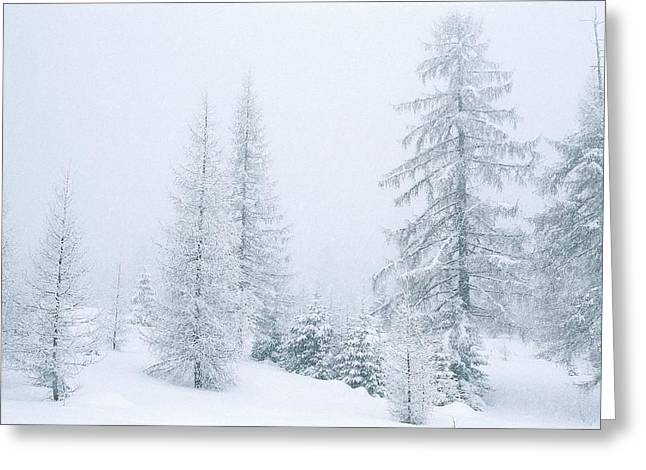 Wintry Photographs Greeting Cards - Winter Landscape Greeting Card by Unknown