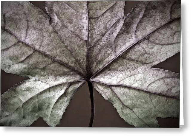 Soft Colour Greeting Cards - Winter Leaf Greeting Card by Artecco Fine Art Photography