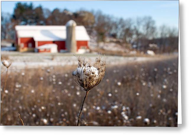 Winter Meadow Greeting Card by Todd Klassy