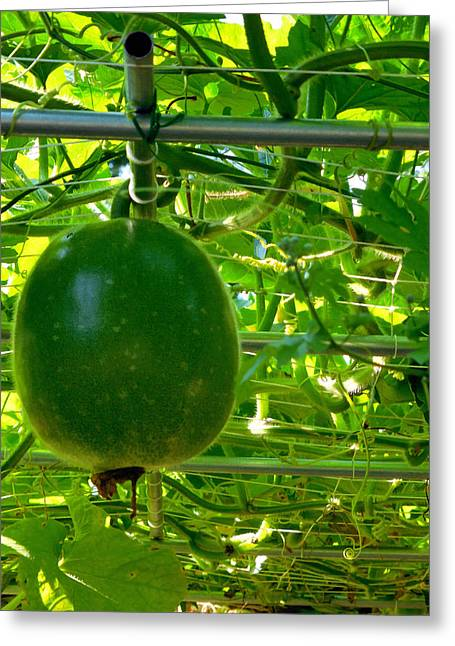 Winter Melon On Its Tree 3 Greeting Card by Lanjee Chee