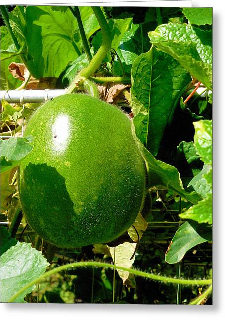 Background Greeting Cards - Winter Melon on its tree 8 Greeting Card by Lanjee Chee