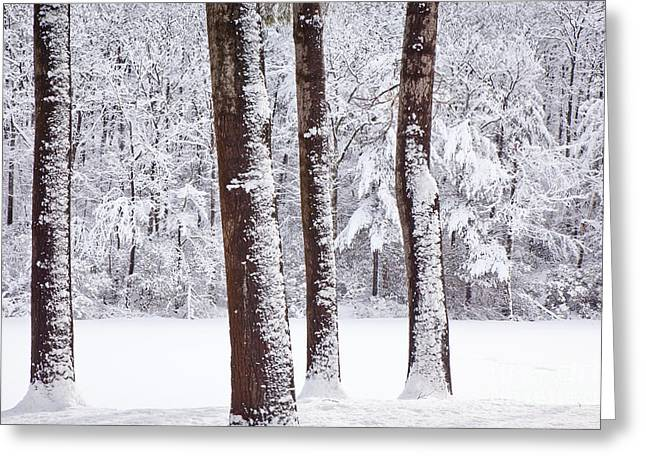 Wild And Scenic Greeting Cards - Winter on Paradise Pond Greeting Card by Susan Cole Kelly