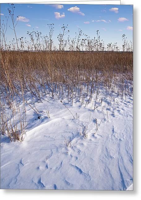 Prairies Greeting Cards - Winter On The Prairie Greeting Card by Steve Gadomski