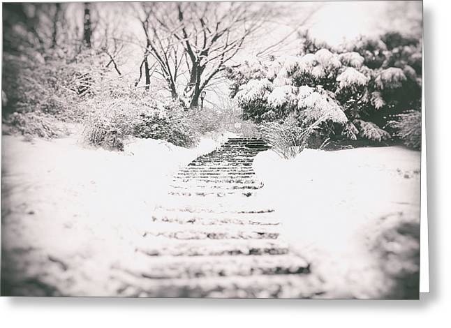 Nature Greeting Cards - Winter Path Greeting Card by Vivienne Gucwa