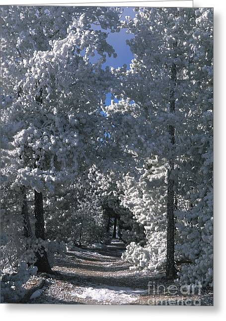 Snow-covered Landscape Greeting Cards - Winter Pathway Greeting Card by Sandra Bronstein