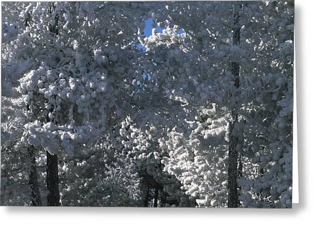 Winter Pathway Greeting Card by Sandra Bronstein