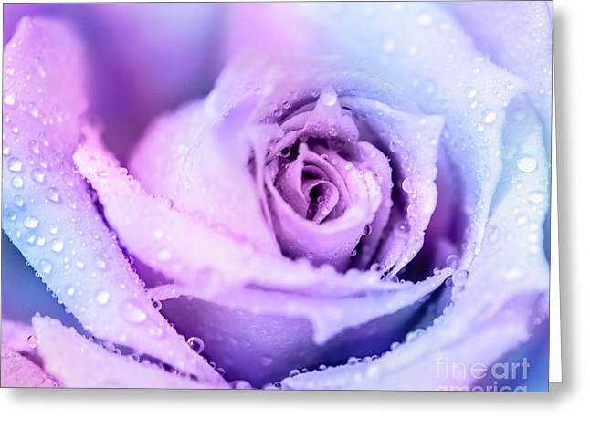 Close Focus Floral Greeting Cards - Winter rose background Greeting Card by Anna Omelchenko