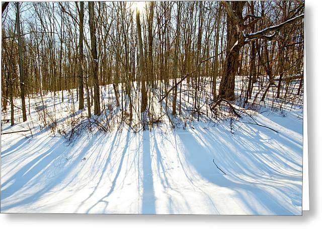 Winter Shadows Greeting Card by Tim Fitzwater