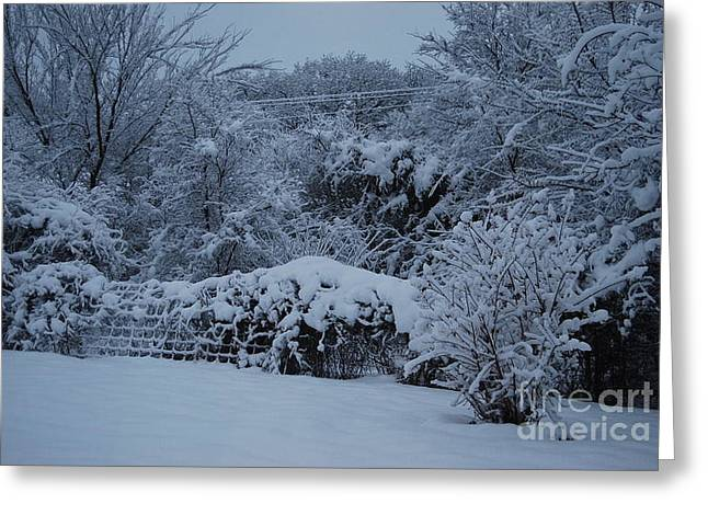 Snow Tree Prints Greeting Cards - Winter Snow in Texas  Greeting Card by Ruth  Housley