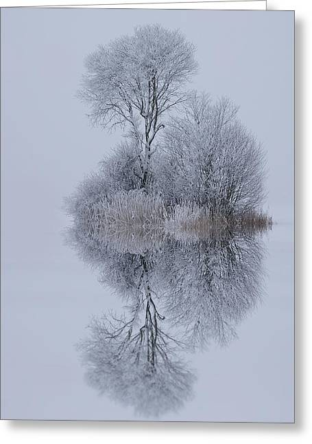 Winter Landscapes Greeting Cards - Winter Stillness Greeting Card by Norbert Maier