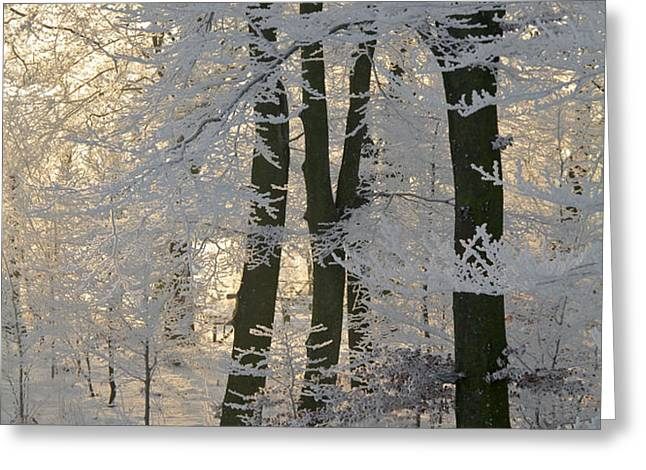 Winter Sun Greeting Card by Odd Jeppesen