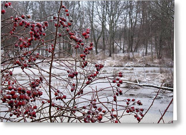 Festivities Greeting Cards - Winter Time Frozen Fruit Greeting Card by Douglas Barnett